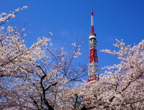 【4月1日】メルマガ読者様限定!お花見ランチ会☆ @東京